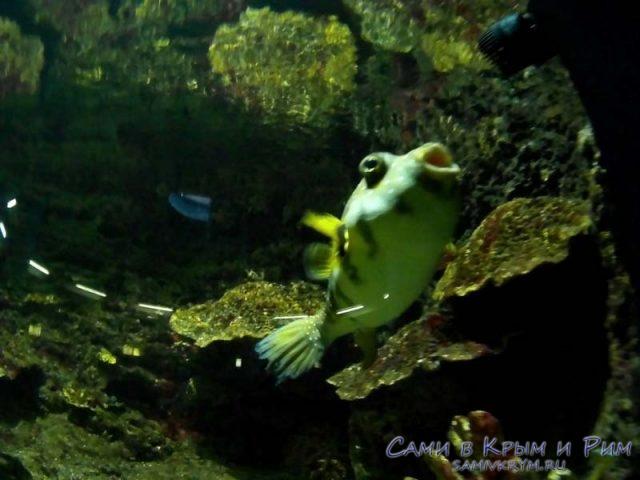 ribi-v-akvariume