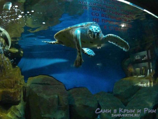 cherepaha-v-akvariume
