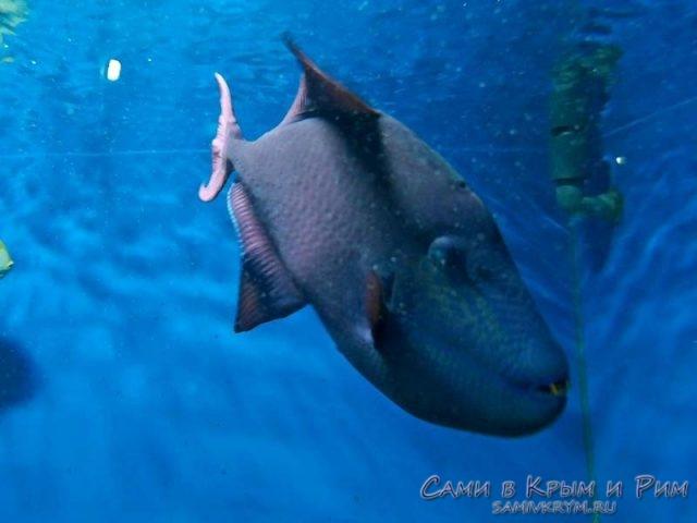 ribi-sevastopolskogo-akavariuma