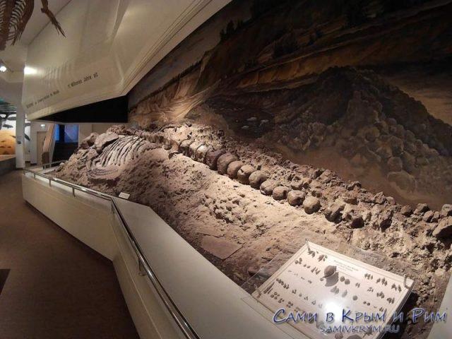 musei-prirodi-v-lubecke