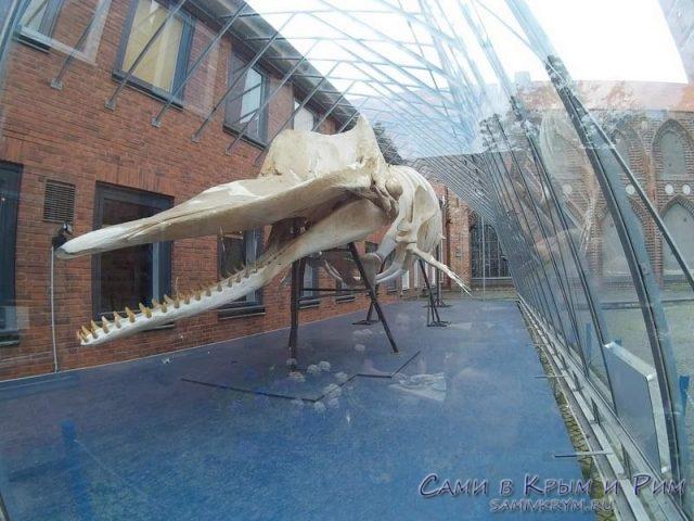 mysei-prirodi-v-lubeke-skelet-kita