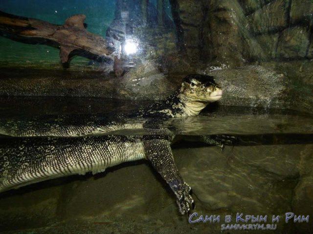 afrikanskie-krokodili