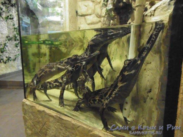 krokodilchiki