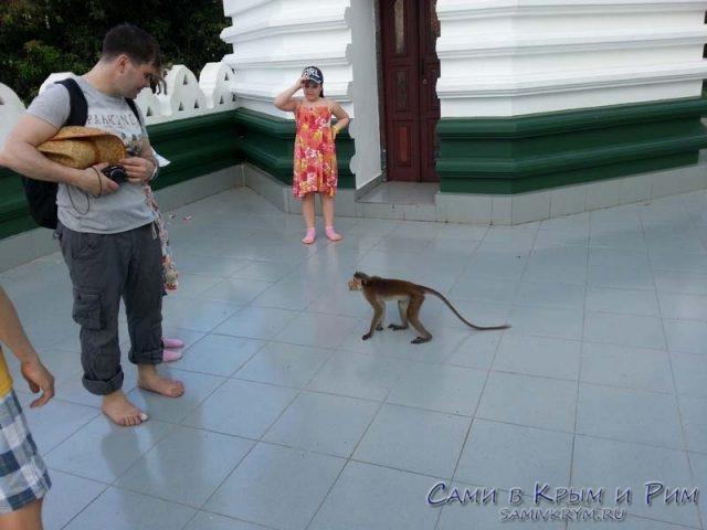агрессивные-обезъяны-в-храме