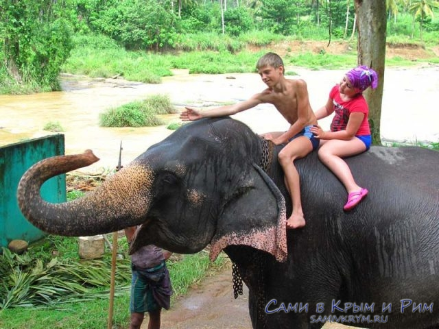 дети-на-слоне