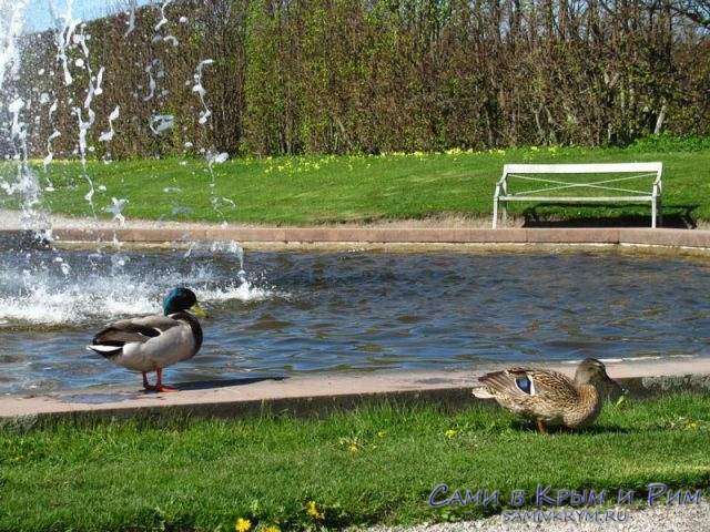 водные-просторы-парка