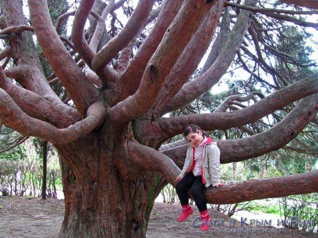 гигантские-деревья