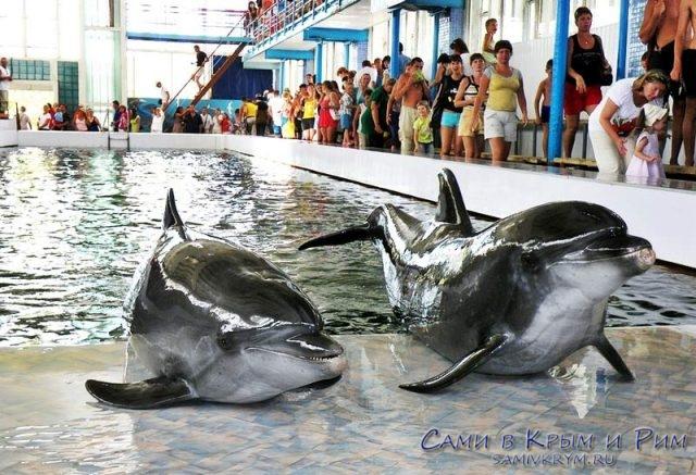 Дельфинарий-в-Курортном
