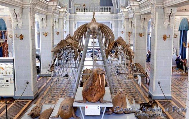 Зоологический-музей-в-Питере