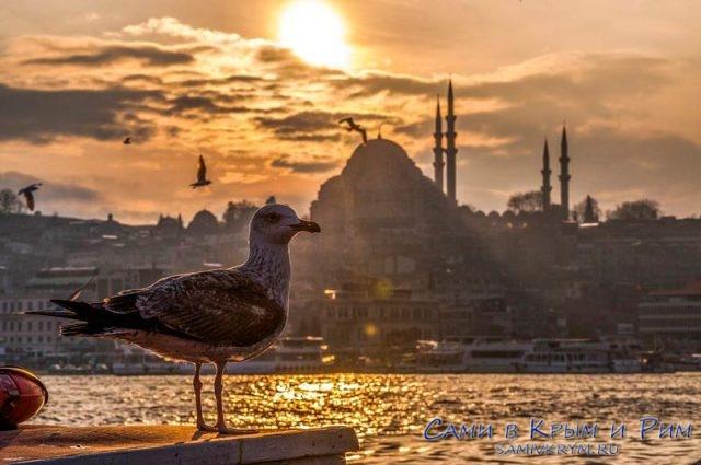 Чайка-на-фоне-Стамбула