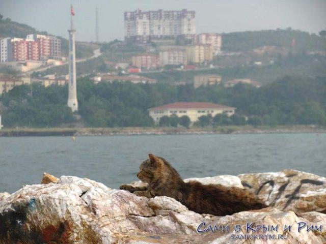 Коты-в-Турции-чувстуют-себя-вольно