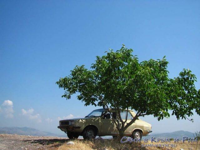 Машина-за-деревом