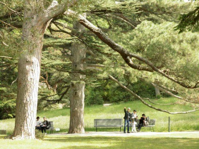 Гигантские-деревья-в-парке
