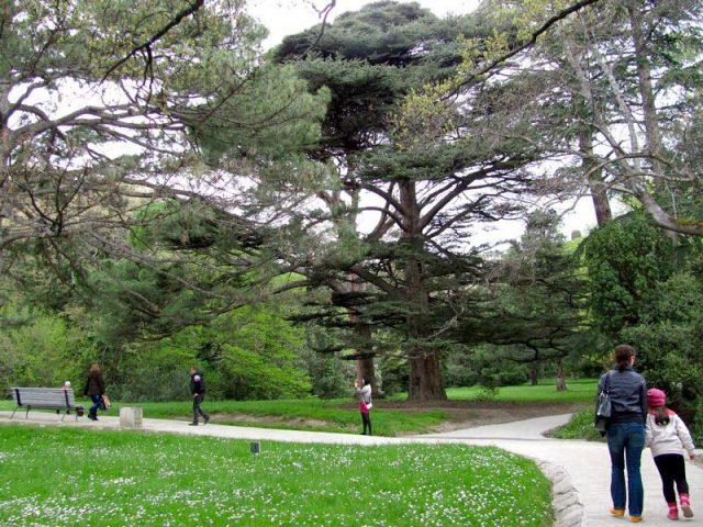 Ромашки-ранней-весной-в-парке