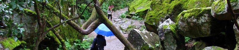 В-дождь-по-алупкинскому-парку