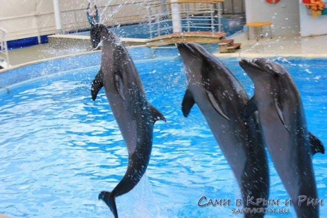 Артисты дельфинария