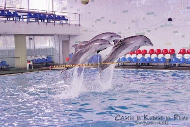 Дельфинарий-в-Санатории-Крым