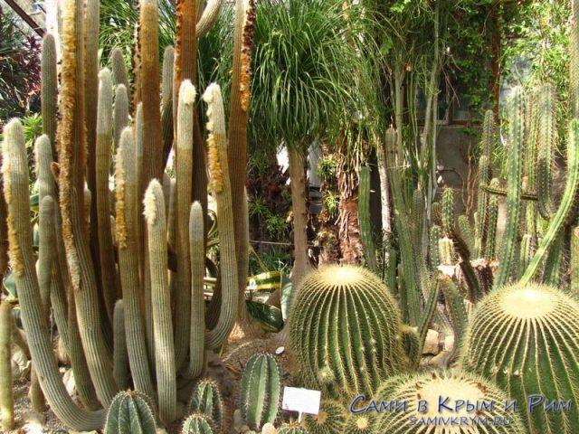 Кактусовая-Оранжерея
