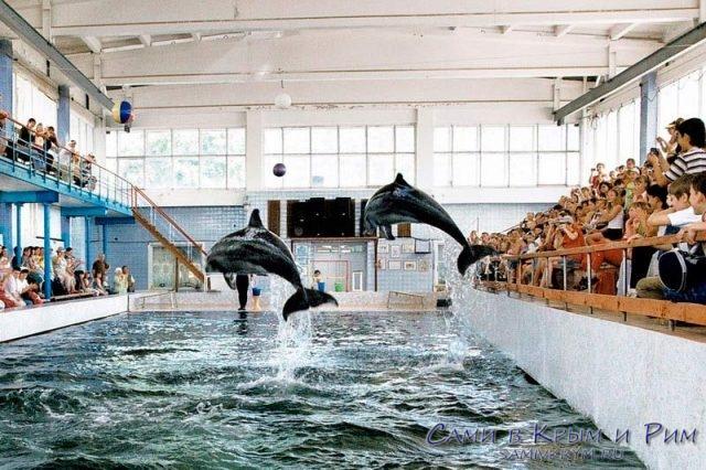 Карадагский-дельфинарий