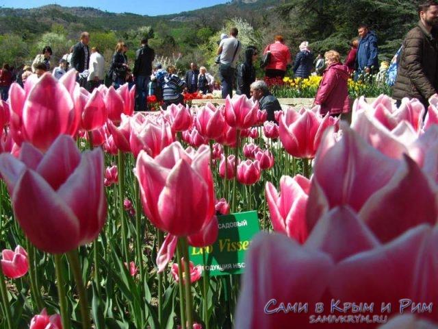 Парад-тюльпанов