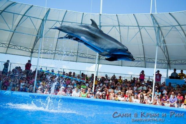 Пердставление в Феодосийском дельфинарии