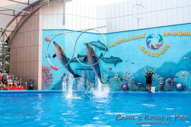 Представление в Алуштинском дельфинарии