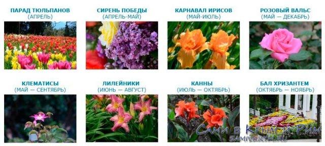 Расписание-событий-в-Никитском-саду