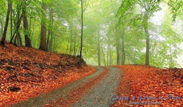 Лес осенью в Крыму