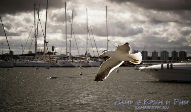 Свободен как птица