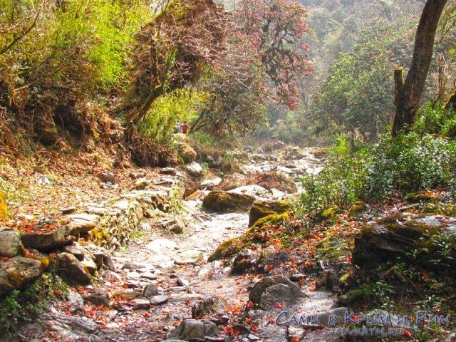 Весенний лес в Гималаях