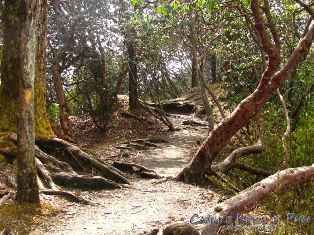 Тадпапани или сказочный лес по пути в Дюрели