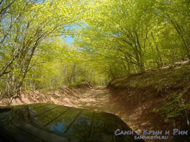 Через буковый лес