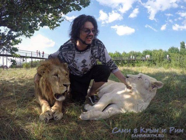 Киркоров со львами в Белогорске