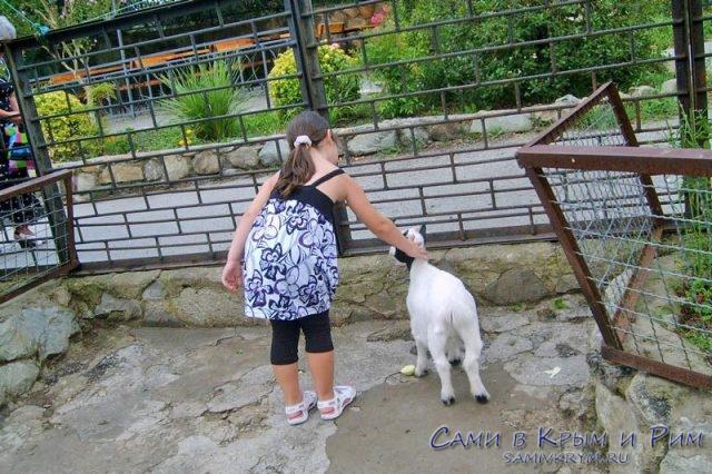 Контактный уголок в зоопарке