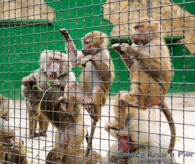 Ну прям как обезьяны