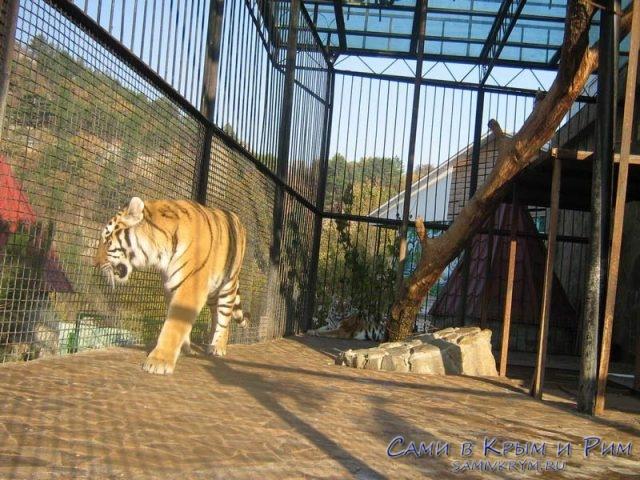 Тигры в клетке