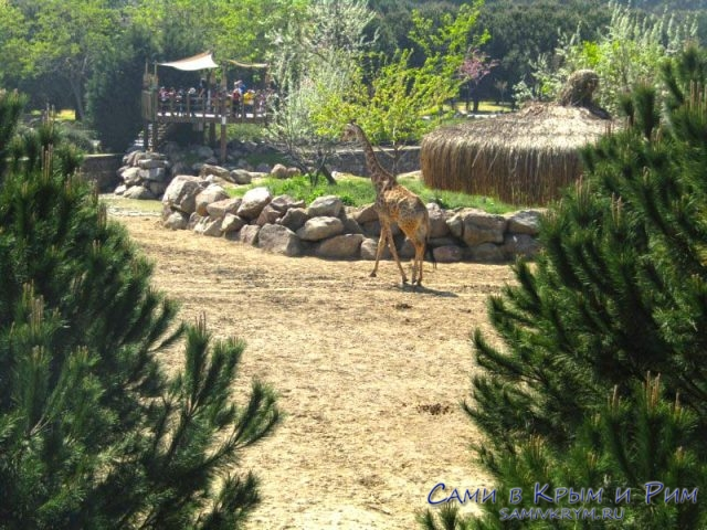 Для жирафов самая большая зона