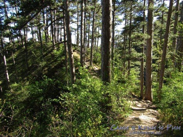 Красивый лес и чистый воздух на треке