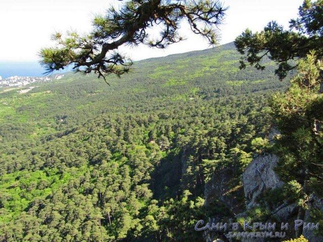 Лесной порков Ялтинской яйлы