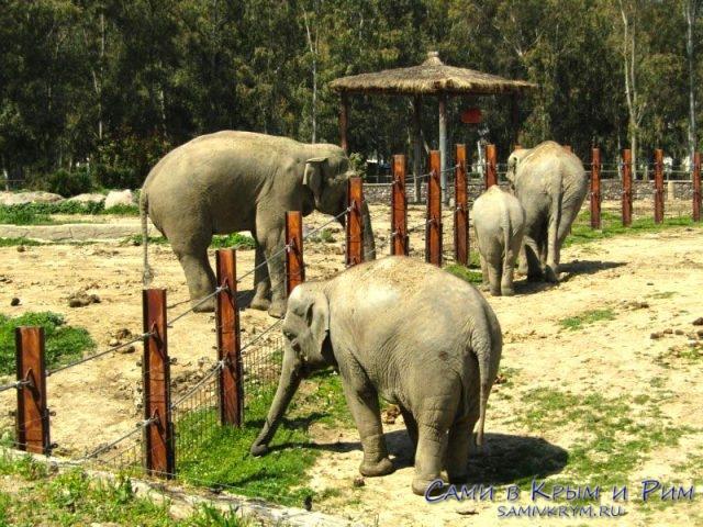 Папу слона отделили от семьи