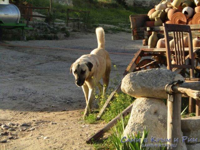 Злые-собаки-в-Гереме