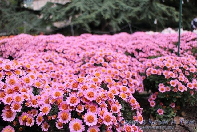 Яркие краски круглый год: выставка живописи и победительница Бала хризантем в Никитском ботаническом саду