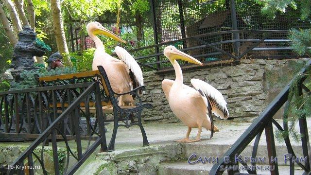 Зоопарки Крыма в «Черном списке» или как капуцин Володя докатился до такой жизни в старости