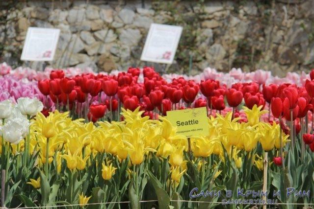 Сто тысяч тюльпанов в Никитском Ботаническом саду