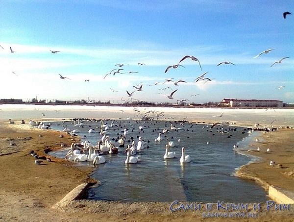 Лебединое озеро в Евпатории станет официальным экскурсионным маршрутом